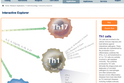 interactive t-cell explorer